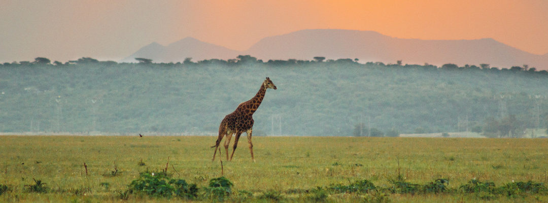 A guide to Sabi Sand Game Reserve